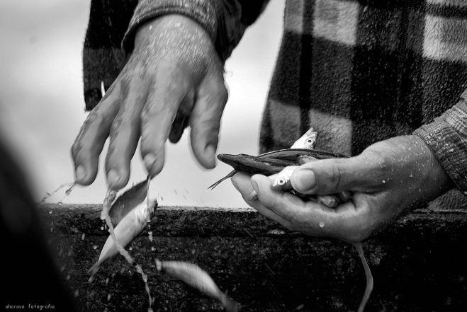 mãos de peixe