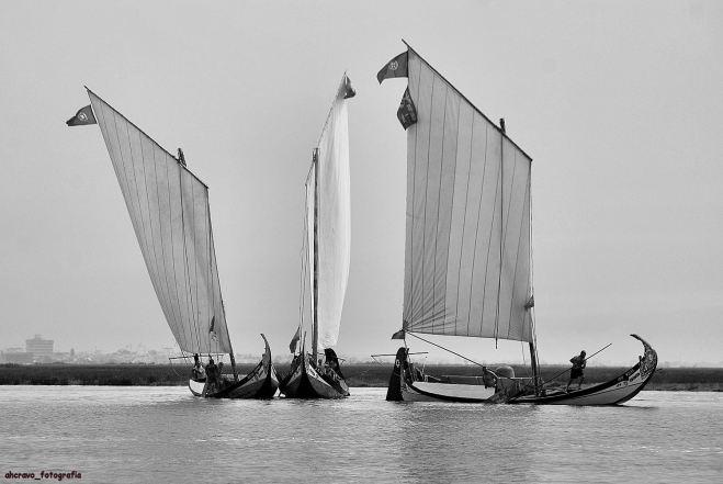 moliceiros no bico, regata de 2010