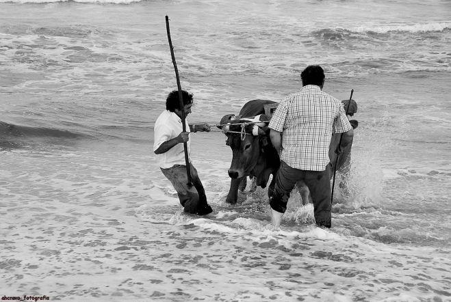 lavrar o mar em espinho