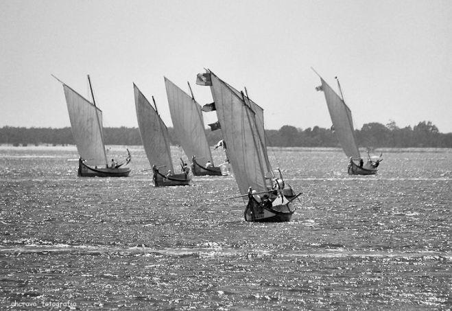 regata moliceiros, bico, 2011