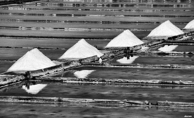 o fazer do sal na morraceira, figueira da foz