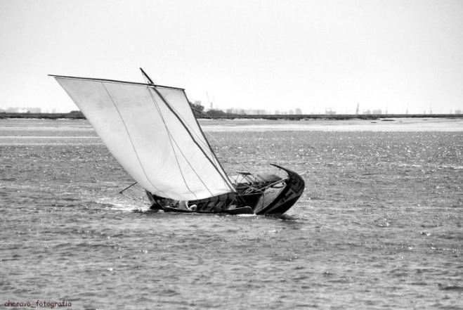 regata bico, 2011