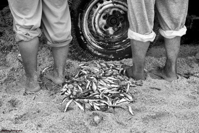 o peixe a seus pés