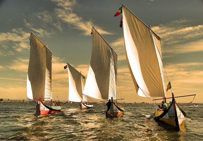 moliceiros de velas ao vento