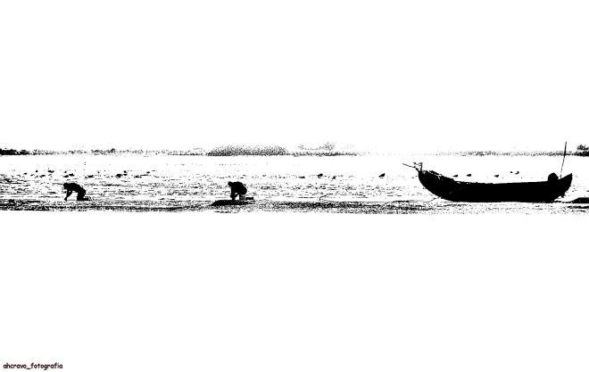 a apanha de bivalves nos secos da ria