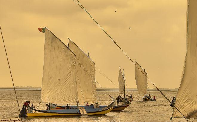 bico, regata de moliceiros, 2007: preparação