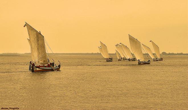 regata de moliceiros, murtosa, bico, 2007