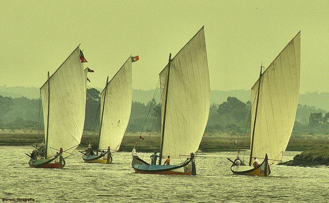 regata de moliceiros, no bico, murtosa, 20017