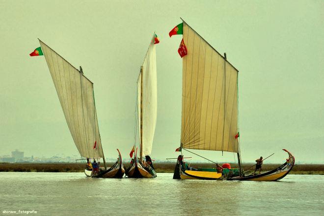 regata de moliceiros, bico, 2010