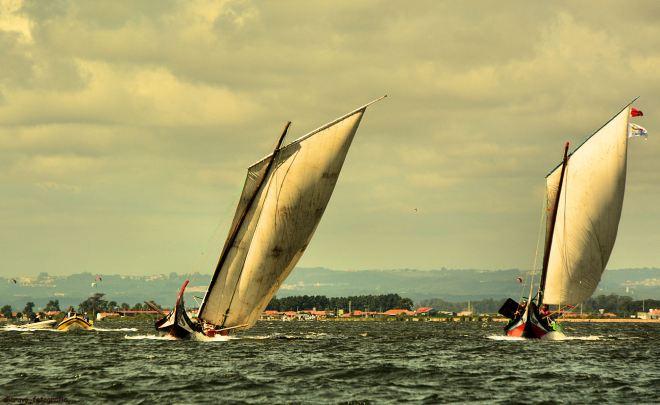 ria de aveiro; regata da ria, 2014