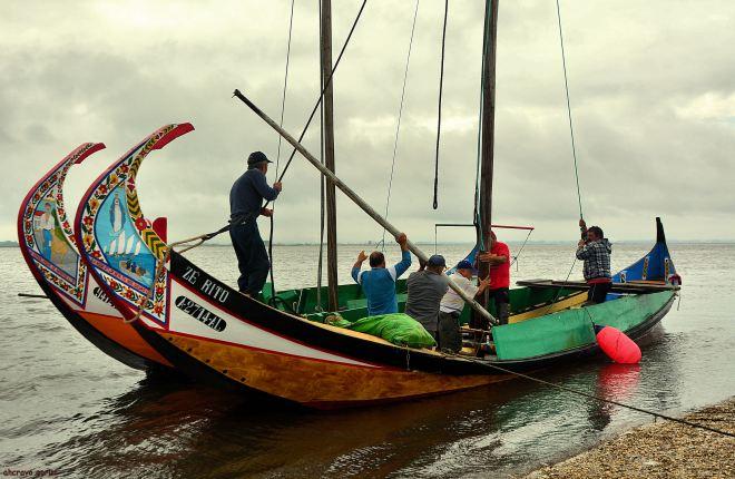 moliceiros, homens e barcos