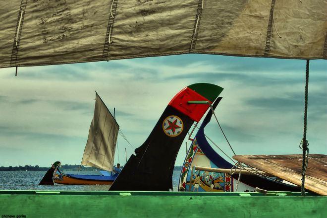 ahcravo_DSC_6788 regata moliceiros bico