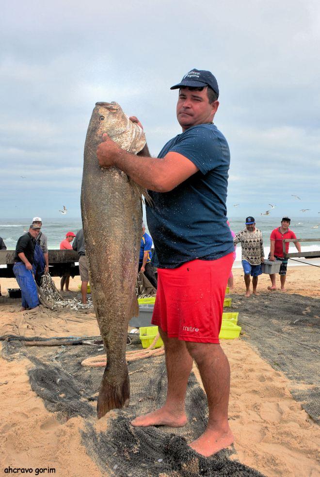 um grande arrais com um peixe enorme