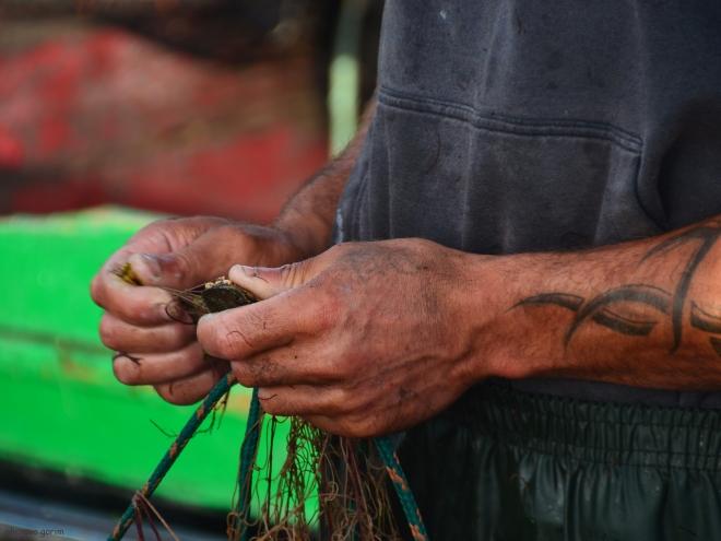 as garras ferem os dedos. o caranguejo infesta a ria