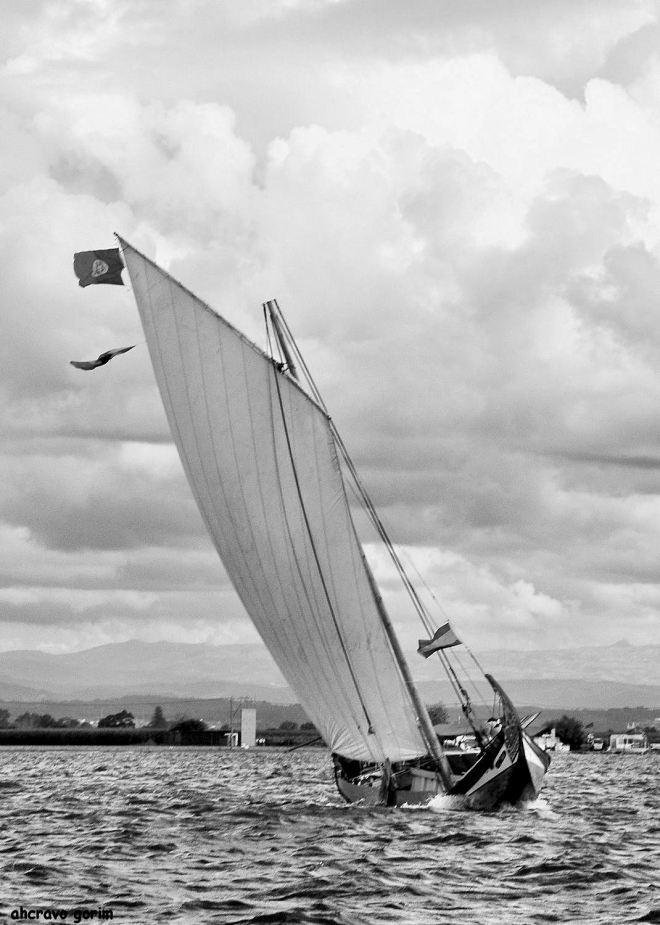 manobrar um moliceiro é arte de navegar