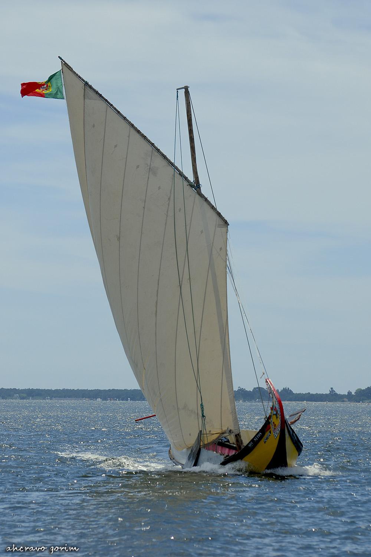 0 ahcravo_DSC_6809 regata moliceiros bico