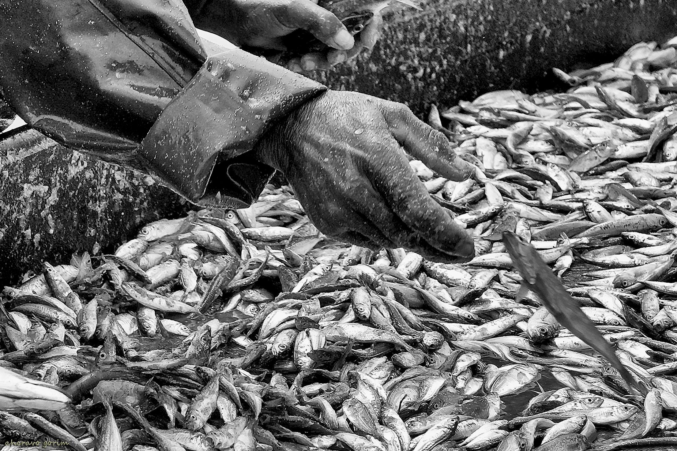 mãos de mar (36) — ahcravo gorim Blog