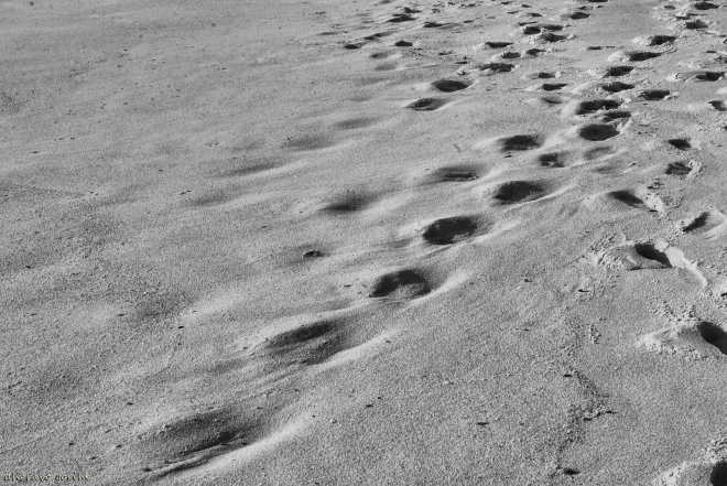 0 ahcravo_DSC_1533_pegadas na areia
