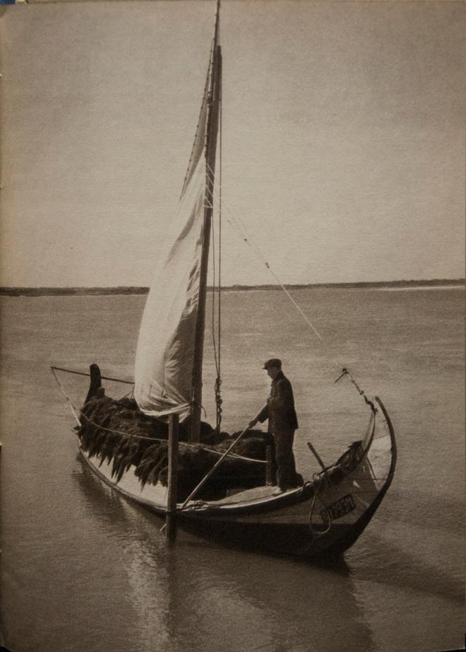 0 moliceiro os pescadores